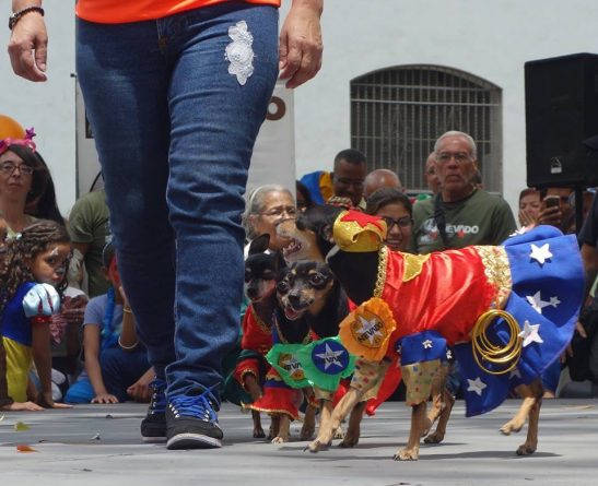 Dogs and Cats Enjoy Carnival in Caracas