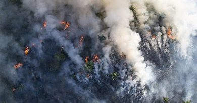 La Via Campesina: Burning the Amazon is a Crime Against Humanity