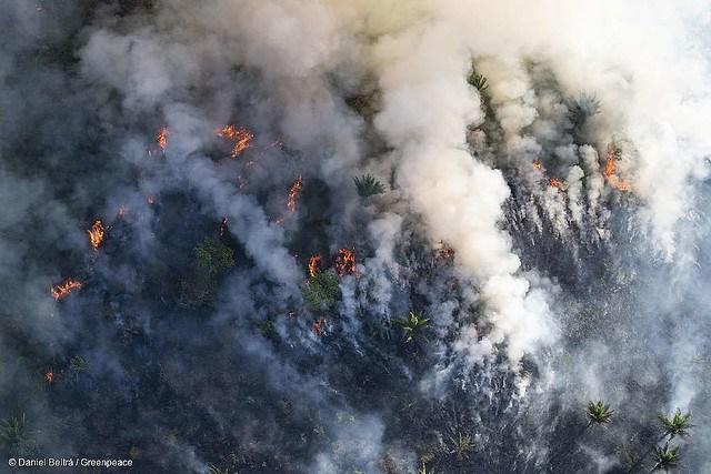 La Via Campesina: Burning the Amazon is a Crime Against Humanity