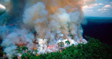 The Amazon Rainforest is Burning as Bolsonaro Fans the Flames