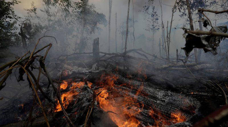 The Intercept: One of Trump's Main Donors Behind Amazonian Deforestation (Stephen Schwarzman)