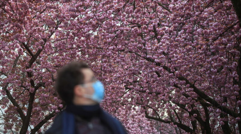 A man wearing a mask walks under cherry blossoms in Bonn, Germany, on April 15, 2021. Wolfgang Rattay / Reuters