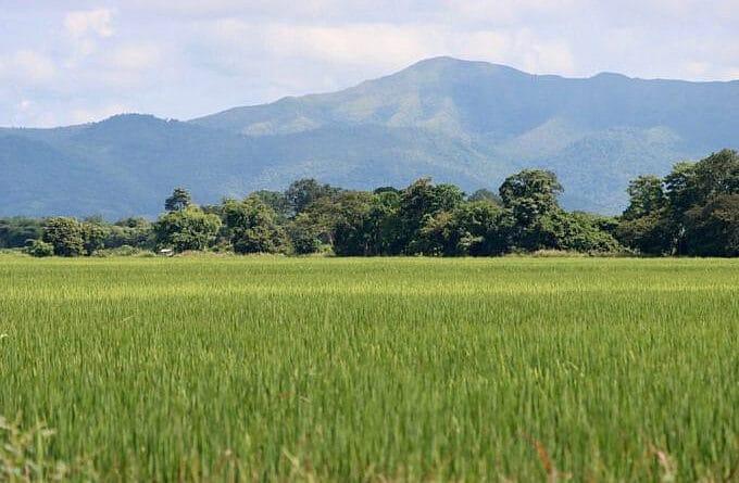 Rice field in Portuguesa state. Photo courtesy of Prensa Presidencial.